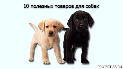 Товары для собак — Десять нужных и полезных товаров для собак