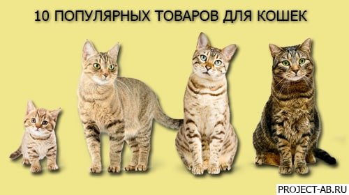 Товары для кошек - Топ 10 полезных и популярных товаров для кошки